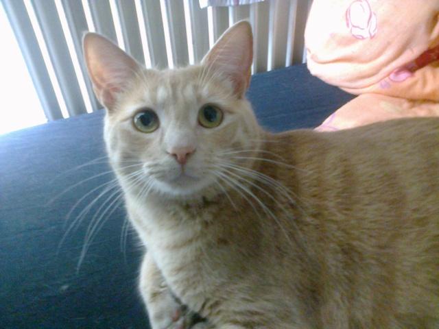 Je vous présente mon chaton : Ambre - Page 3 Photo016