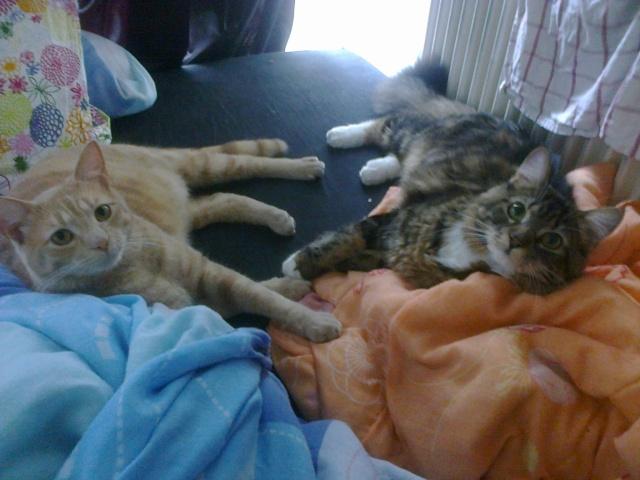 Je vous présente mon chaton : Ambre - Page 3 Photo017