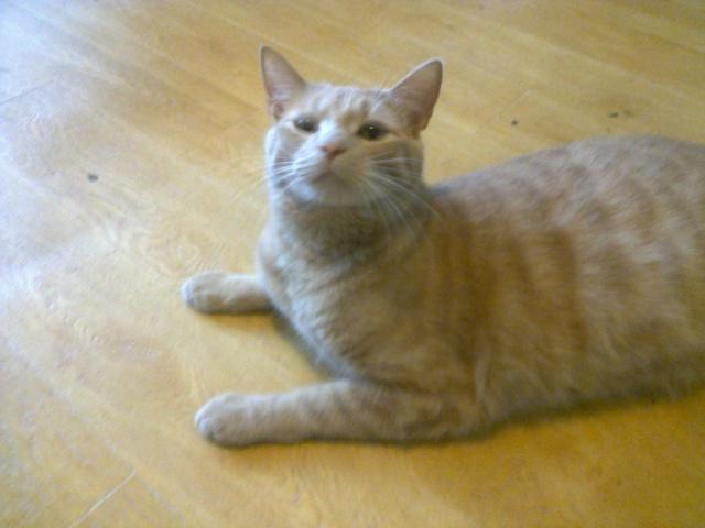 Je vous présente mon chaton : Ambre - Page 3 Photo018