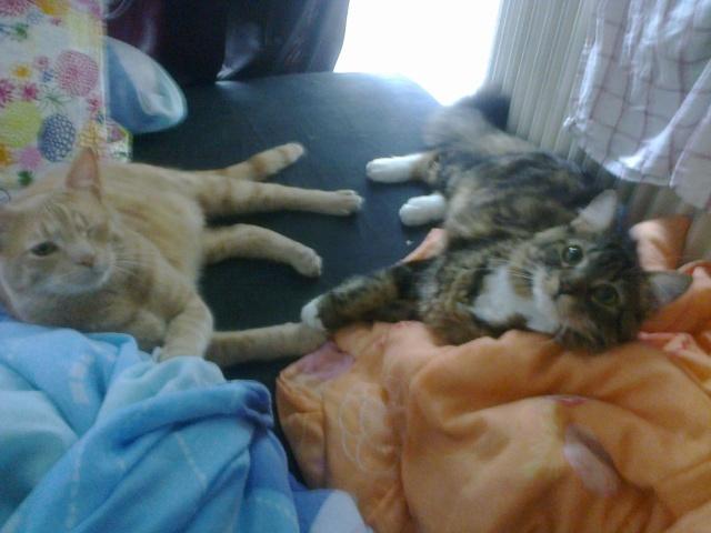 Je vous présente mon chaton : Ambre - Page 3 Photo019