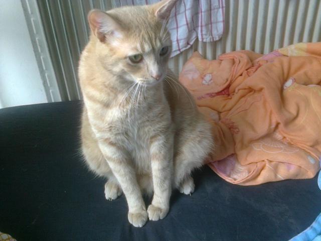 Je vous présente mon chaton : Ambre - Page 3 Photo028