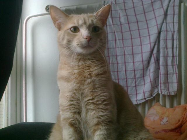 Je vous présente mon chaton : Ambre - Page 3 Photo029