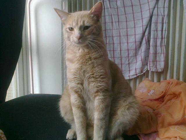 Je vous présente mon chaton : Ambre - Page 3 Photo030