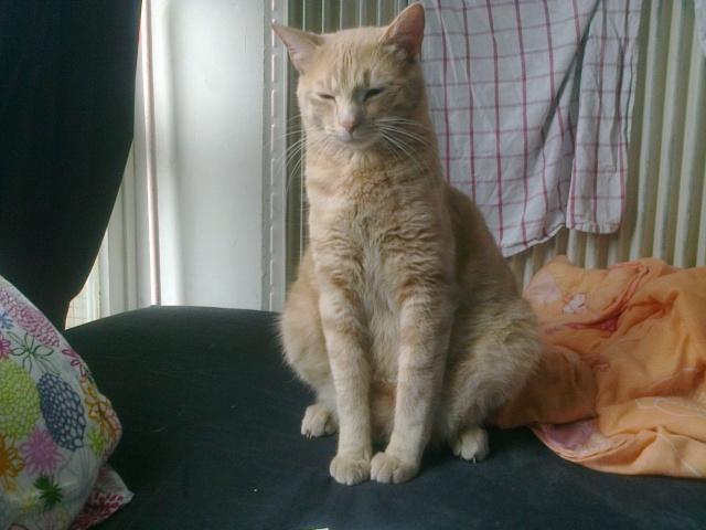 Je vous présente mon chaton : Ambre - Page 3 Photo031