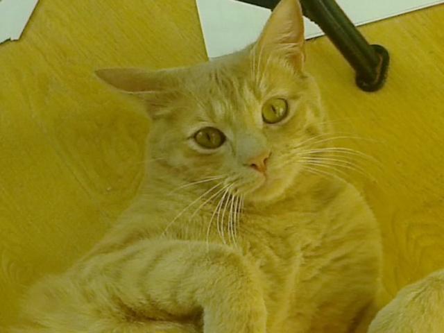Je vous présente mon chaton : Ambre - Page 3 Photo049
