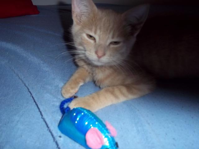 Je vous présente mon chaton : Ambre Photo_13