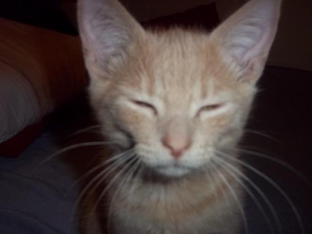Je vous présente mon chaton : Ambre Photo_14