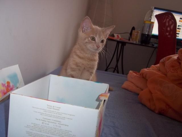 Je vous présente mon chaton : Ambre Photo_16