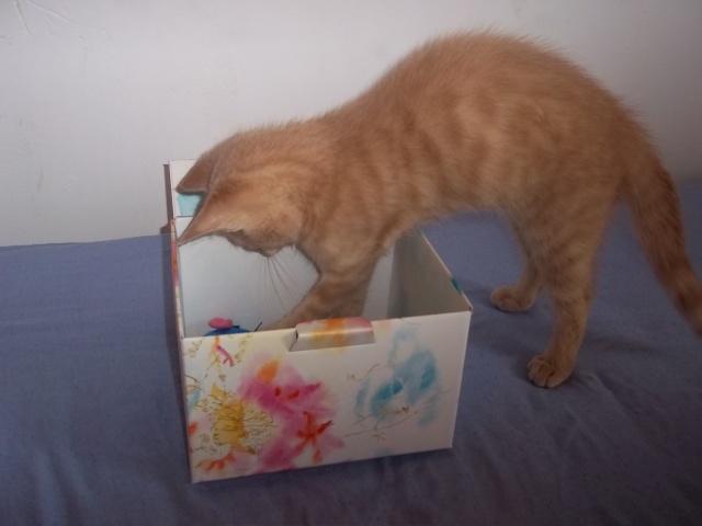 Je vous présente mon chaton : Ambre Photo_17