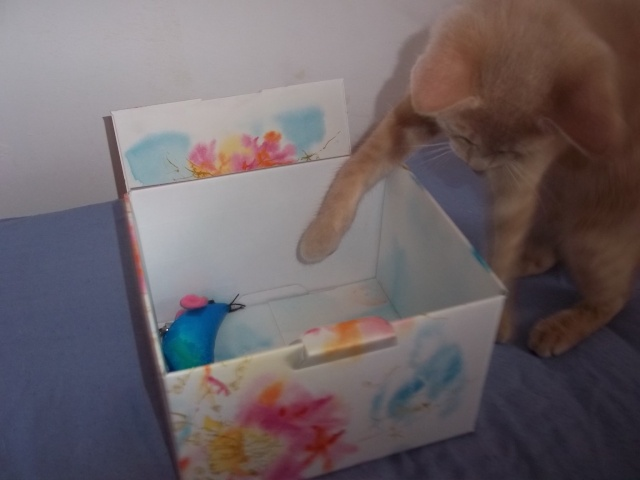 Je vous présente mon chaton : Ambre Photo_18