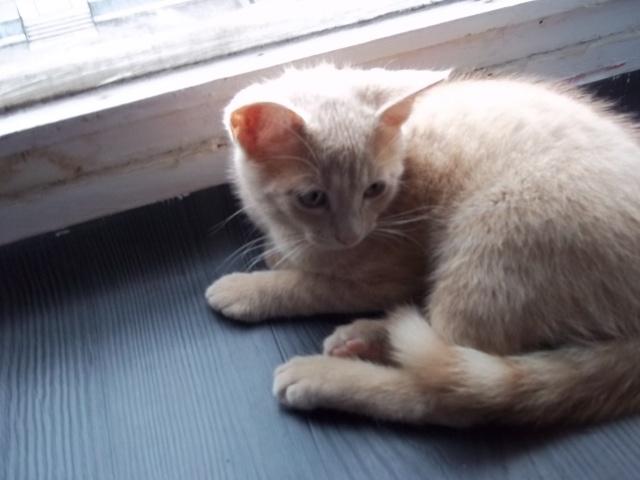 Je vous présente mon chaton : Ambre Photo_21