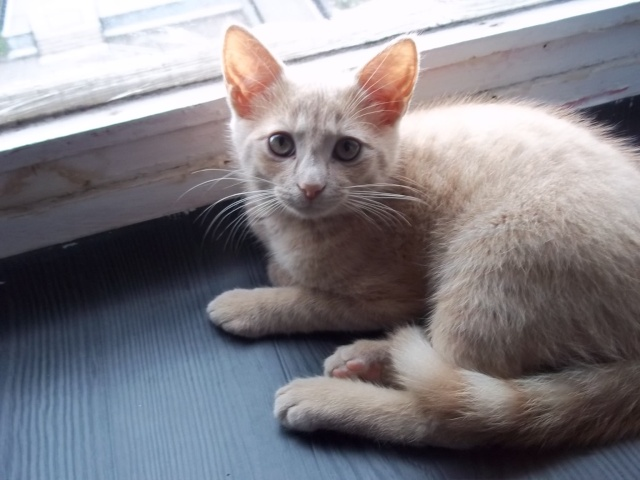 Je vous présente mon chaton : Ambre Photo_22