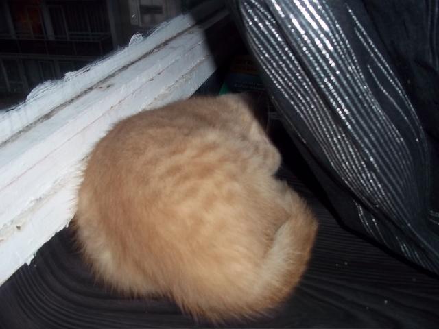 Je vous présente mon chaton : Ambre Photo_23