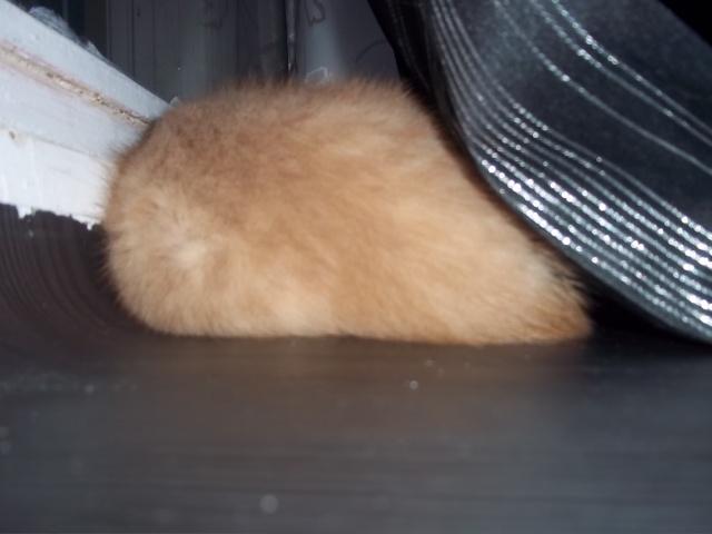 Je vous présente mon chaton : Ambre Photo_24