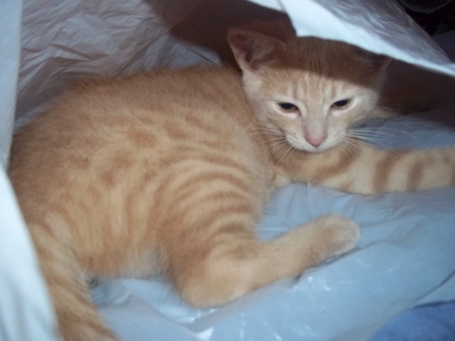 Je vous présente mon chaton : Ambre Photo_26