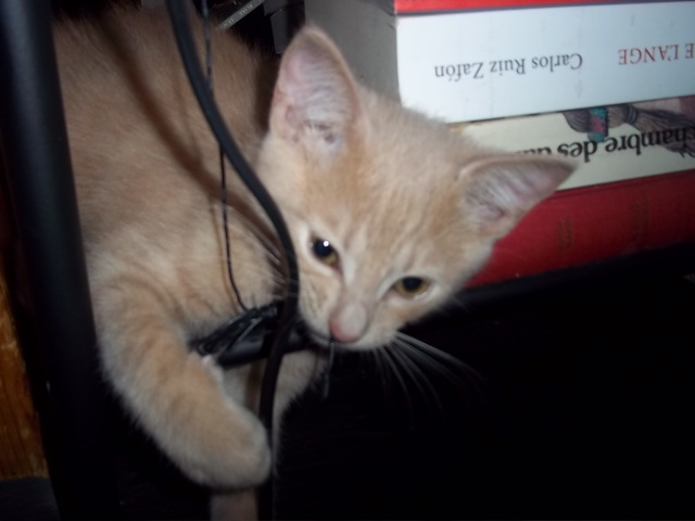 Je vous présente mon chaton : Ambre Photo_28