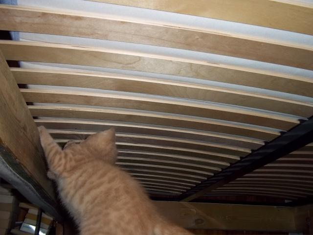 Je vous présente mon chaton : Ambre Photo_35