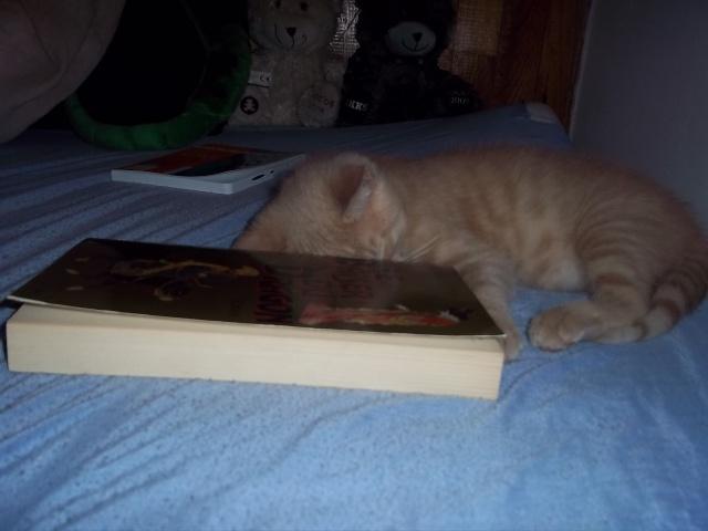 Je vous présente mon chaton : Ambre Photo_43