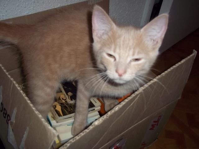 Je vous présente mon chaton : Ambre Photo_44