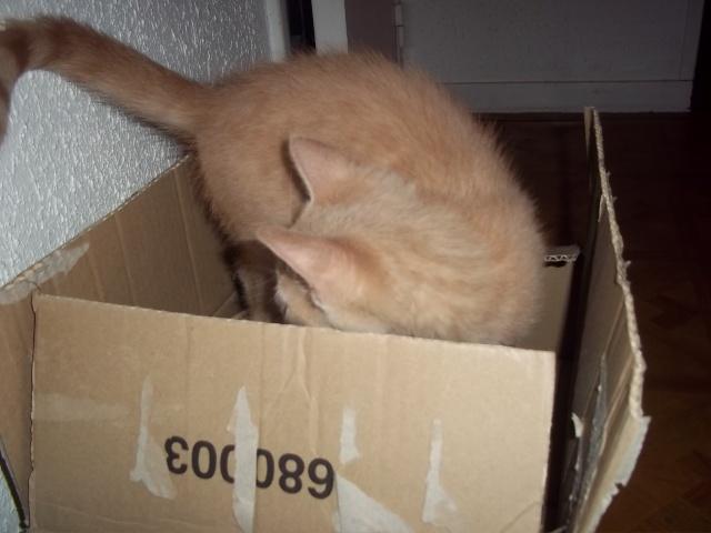 Je vous présente mon chaton : Ambre Photo_45