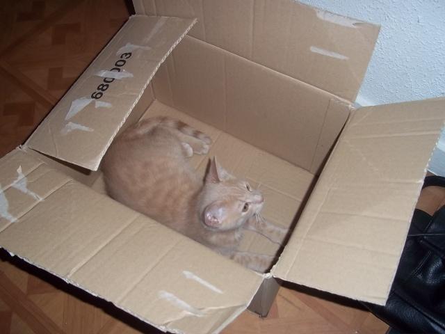 Je vous présente mon chaton : Ambre - Page 2 Photo_53