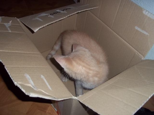 Je vous présente mon chaton : Ambre - Page 2 Photo_54