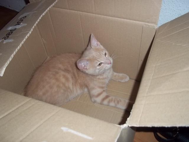 Je vous présente mon chaton : Ambre - Page 2 Photo_55