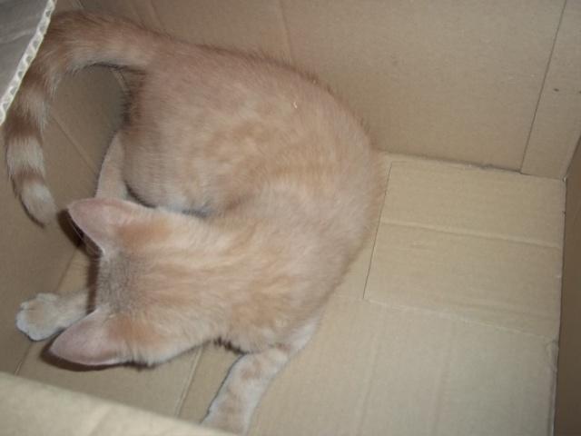 Je vous présente mon chaton : Ambre - Page 2 Photo_56