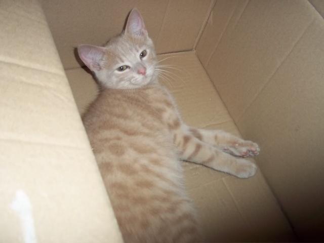 Je vous présente mon chaton : Ambre - Page 2 Photo_58