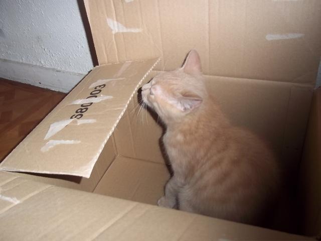 Je vous présente mon chaton : Ambre - Page 2 Photo_59
