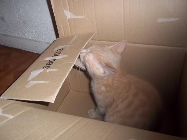 Je vous présente mon chaton : Ambre - Page 2 Photo_60