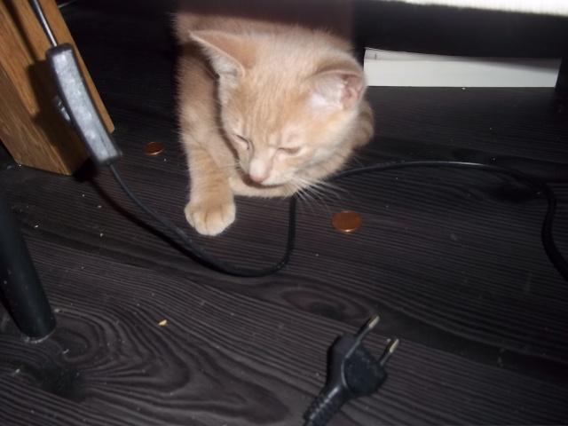 Je vous présente mon chaton : Ambre - Page 2 Photo_61