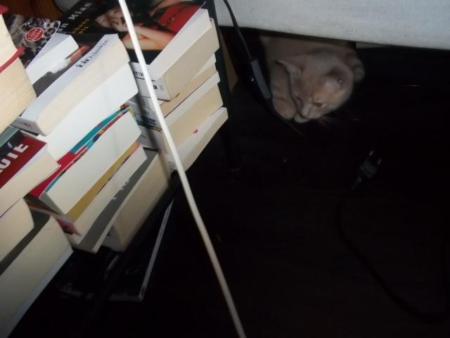 Je vous présente mon chaton : Ambre - Page 2 Photo_62