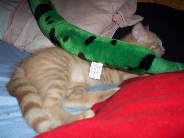 Je vous présente mon chaton : Ambre - Page 2 Photo_72
