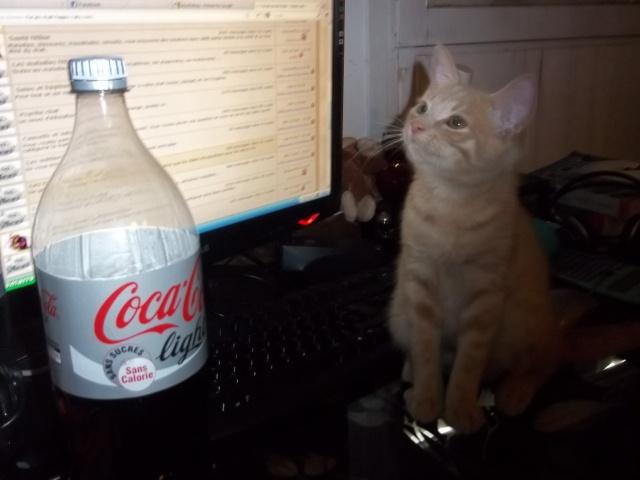 Je vous présente mon chaton : Ambre - Page 2 Photo_77