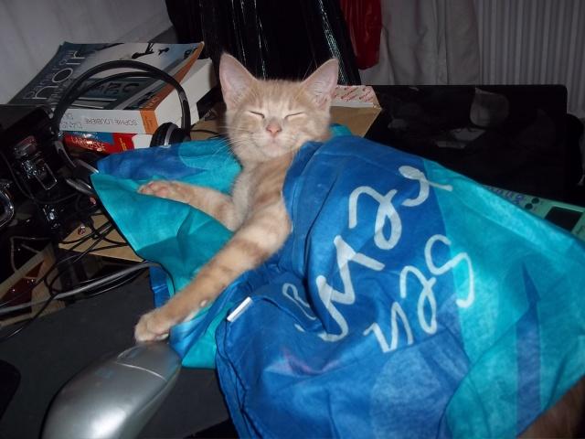 Je vous présente mon chaton : Ambre - Page 2 Photo_83