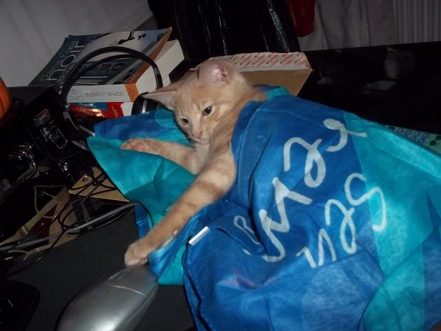 Je vous présente mon chaton : Ambre - Page 2 Photo_84