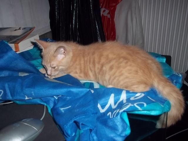 Je vous présente mon chaton : Ambre - Page 2 Photo_85