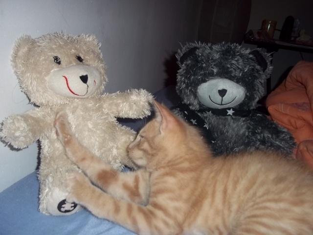 Je vous présente mon chaton : Ambre - Page 2 Photo_86
