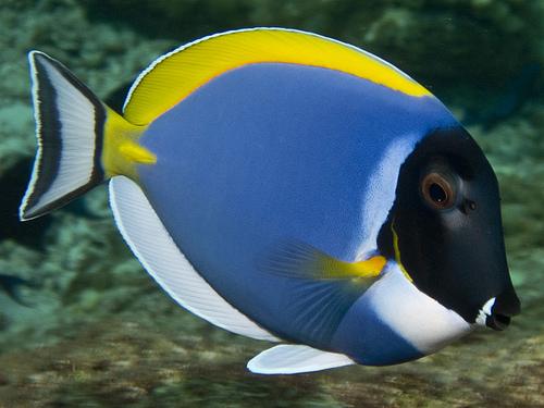 Quel poisson rêvez-vous de possèder? 24494510