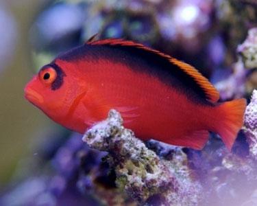 Quel poisson rêvez-vous de possèder? Hawkfi10