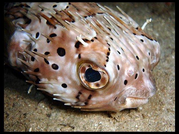 Quel poisson rêvez-vous de possèder? Poisso11