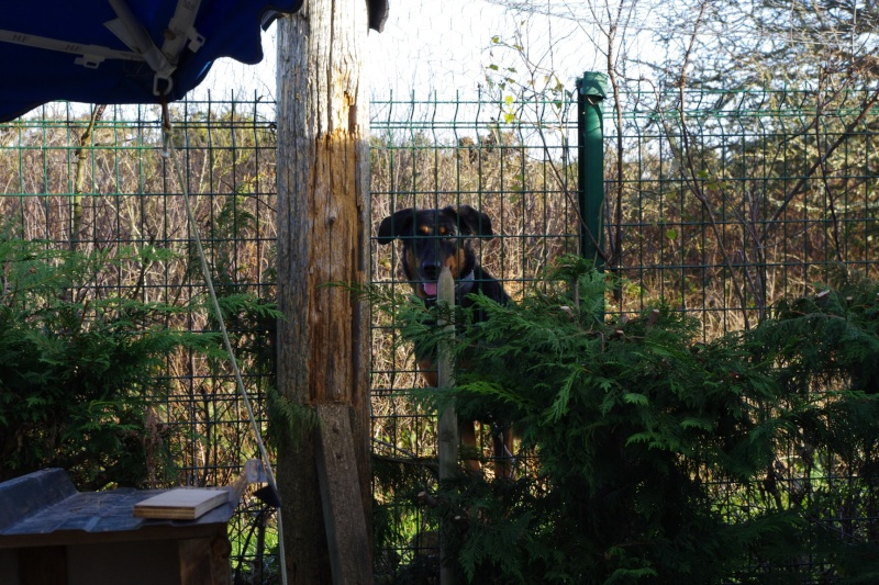 La face cachée de l'Ecole du chat de Quiberon - Page 3 Imgp7312