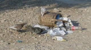 Συμμετέχουμε στην Παγκόσμια Ημέρα Εθελοντικού Καθαρισμού των Ακτών Hpim0920