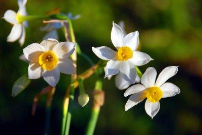 ΒΑΓΟΡΑ ΠΑΝΤΑ ΠΡΩΤΟΣ! Narcis12