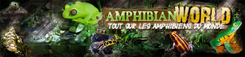 amphibian world