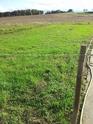 [sujet déplacé en section agriculture] planter du blé d'hiver Ble_fi10
