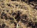 [sujet déplacé en section agriculture] planter du blé d'hiver Dsc01010