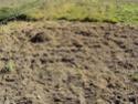 [sujet déplacé en section agriculture] planter du blé d'hiver Dsc01011
