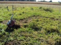 [sujet déplacé en section agriculture] planter du blé d'hiver Dsc01012